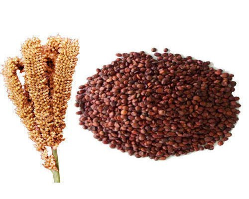 Finger-Millet-Ragi-Suppliers-Tamil-Nadu